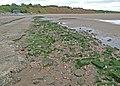 Causeway - geograph.org.uk - 869986.jpg