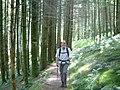 Cefncwellyn woods - geograph.org.uk - 14147.jpg