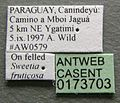 Cephalotes pusillus casent0173703 label 1.jpg