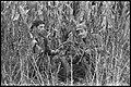 Chasse en Yougoslavie du 18 au 23 oct. 68 (1968) - 53Fi6785.jpg