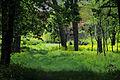 Cherkasy Sosnivka Park 20.JPG