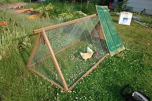 A lightweight chicken tractor I built, with ou...