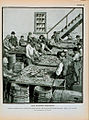 Children at sardine cannery cleaning herring.jpg