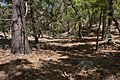 Chloride Creek - Flickr - aspidoscelis (1).jpg