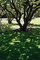 City of London Cemetery Memorial Gardens lawn dappled light and shade 1.jpg