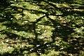 City of London Cemetery Memorial Gardens lawn dappled light and shade 3.jpg