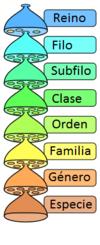 Clasificación taxonómica.png