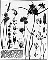 Class-book of botany (microform) - being outlines of the structure, physiology, and classification of plants - with a flora of the United States and Canada (1875) (20453783500).jpg