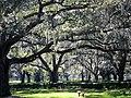 Clearwater,Florida,USA. - panoramio (43).jpg