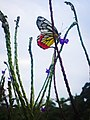 Colorful butterfly and wild flowers.jpg