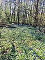 Coneyback Wood, Great Missenden, April 2020.jpg