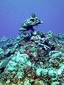 Coral Formation 4 (7157645635).jpg