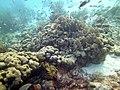 Coral scene 8 (7342763590).jpg