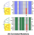 Correlated Mutations Method.png
