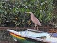 Costa Rica 73.DSCN3897-new (30761837750).jpg
