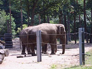 Cottbus Zoo - Image: Cottbus Tierpark Elefantengehege