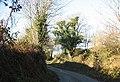 Country lane - geograph.org.uk - 671376.jpg