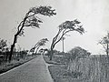 Country road in East Frisia, Germany, Oct. 1969.jpg