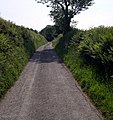 Country road near Gelynen - geograph.org.uk - 1335605.jpg