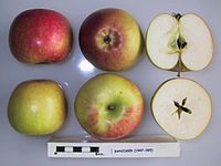 Cross section of Banziger, National Fruit Collection (acc. 1947-095).jpg