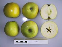 Cross section of Cloden, National Fruit Collection (acc. 1978-340).jpg