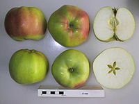 Cross section of Starr, National Fruit Collection (acc. 1952-118).jpg