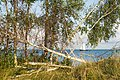 Curonian Lagoon 2019-08-21-1.jpg