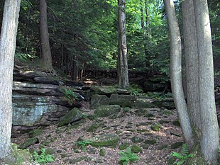 Bedrock outcrops, such as this one, can be found throughout the park.