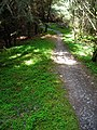 Cycle Trail in Dalbeattie Forest - geograph.org.uk - 453125.jpg