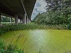 Dörfleins Teich Autobahnbrücke 5250297.jpg