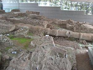 Nanjing Massacre Memorial Hall - Skeletal remains