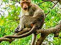Daulatabad, Aurangabad - panoramio (42).jpg