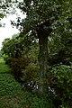 De ringgracht rond het verdwenen Hof ter Elst in Tildonk , Haacht - 368730 - onroerenderfgoed.jpg