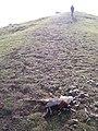 Death on Midsummer Hill - geograph.org.uk - 111282.jpg