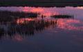 Delte Ebre zona-laBanya 4854-01.jpg