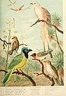 Die Nord-Amerikanische Vogelwelt (1889) (20911455906).jpg