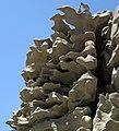 Differentially cemented & eroded sandstone (member C, Uinta Formation, Eocene; Fantasy Canyon, Utah, USA) 31 (24548997280).jpg