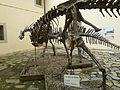 DinosaursCalci (5).JPG