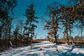 Do Not Enter - Winter road closure at St. Croix State Park (39446623691).jpg