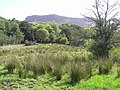 Drummans Townland - geograph.org.uk - 1482549.jpg