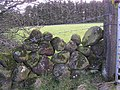 Dry Stone Wall, Old Freehold - geograph.org.uk - 719086.jpg