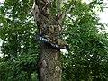 Drzewo głodne energii - panoramio.jpg
