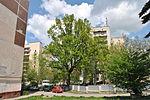 Dub-Ternopilskyi-15056276.jpg