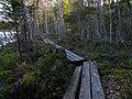 Duckboards near Vähä Kausjärvi, Birgitan Polku - panoramio.jpg