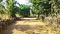 Dugariya, Madhya Pradesh 471101, India - panoramio (75).jpg