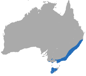 Dusky Antechinus area.png