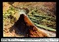 ETH-BIB-Ingenio-S.Lucia, Gran Canaria, terrassierte Schlucht mit Lava-Zapfen-Dia 247-07435.tif