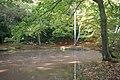 Earl's Path Pond - geograph.org.uk - 2118066.jpg