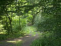 Ebstorf Waldweg.jpg