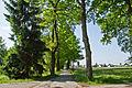 Eichenalle in Schrems Richtung Süden 2014-05 NÖ-Naturdenkmal GD-129.jpg